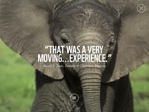 wwf-elephant-video