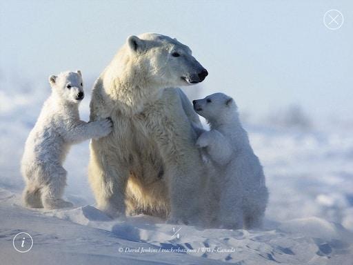 wwf-polar-bears-screenshot