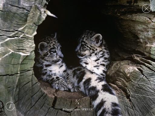 wwf-snow-leopard-screenshot